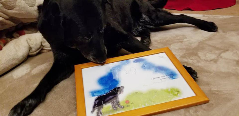【 LANA 】- labrador retriever - summer of 2017
