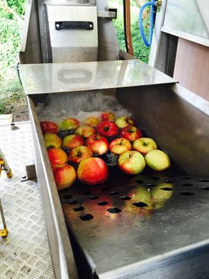 Anschließend wird das Obst über eine Förderschnecke nach oben befördert und klein geschreddert.