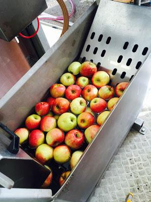 Bevor man die leckeren und saftigen Äpfel zerkleinert müssen sie gewaschen werden!