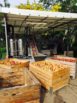 Unsere Anlage mit frischgepflückten Äpfeln.
