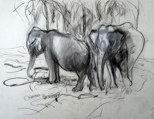 Elefanten Sri Lanka nv