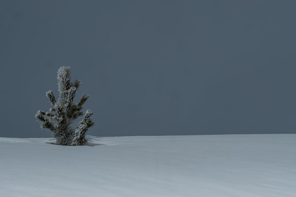 Die Plose: Schnee satt auf 2200m