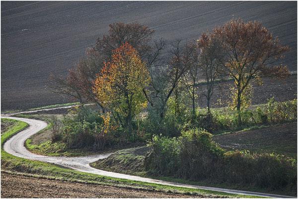 Tradinik Friedrich, Hollabrunn, Rang 29 - Bild 261, 24 Punkte ( 8 8 8)