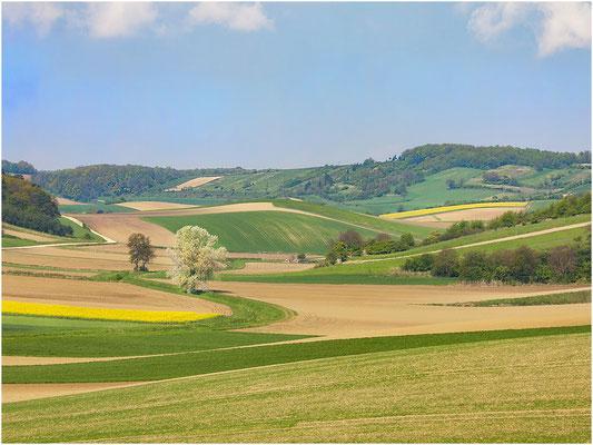 Steinbach Lieselotte, Stockerau, Rang 35 - Bild 252, 27 Punkte ( 10 8 9)