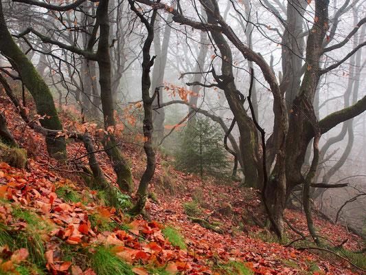 Verwachsene Bäume am Hang der Egge