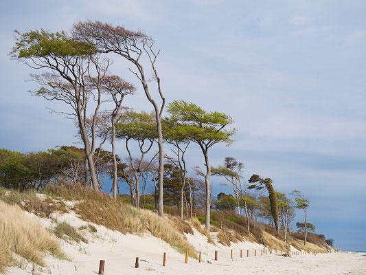 Buchen am Strand