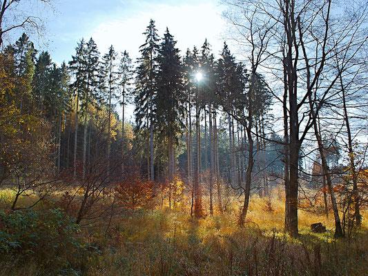 Im Harz bei Hasselfelde