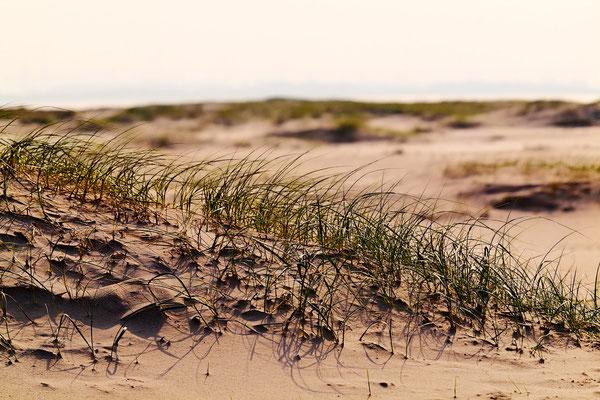 Das Gras ist eine der ersten Pflanzen im Sand