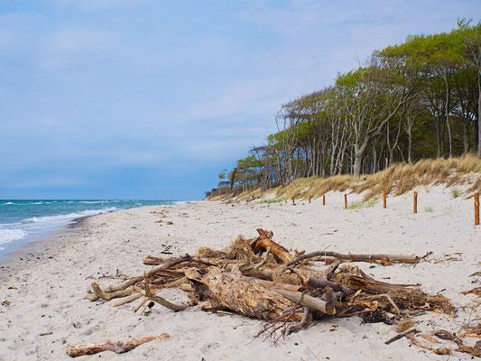 Treibholz am Strand