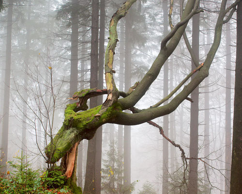 Ein abgebrochener Baum findet Halt bei den Nachbarn