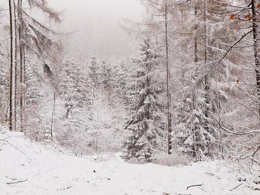 Verschneiter Teutoburger Wald
