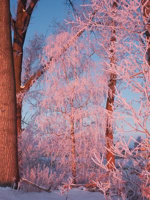Farben der Wintersonne
