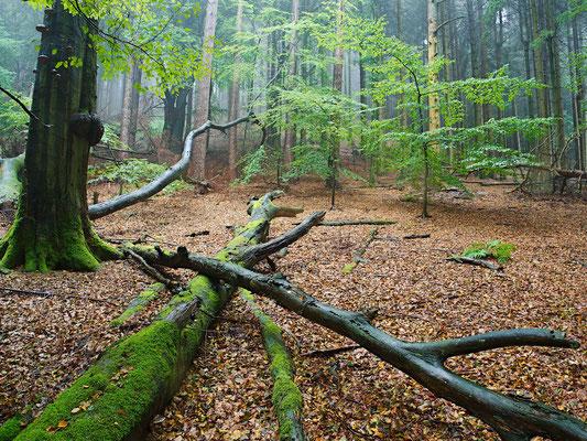 Im Teutoburger Wald im Regen