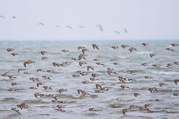 Zugvögel am Osterhook