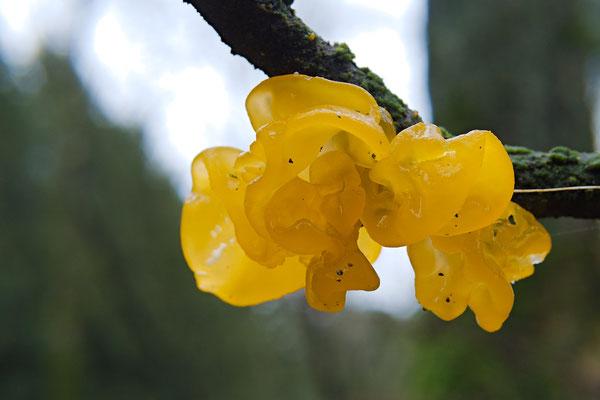Ein eher schwabbeliger Pilz