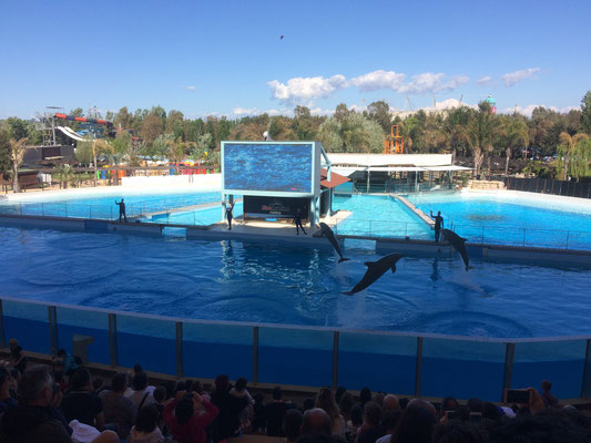 Lo stadio Dolphin Discovery