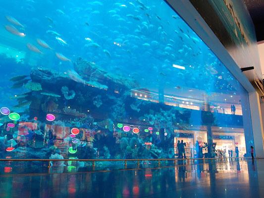Acquario di Dubai