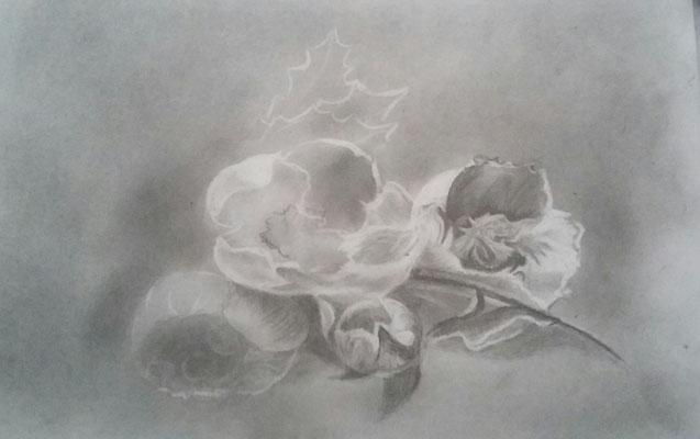 Esquise de fleurs