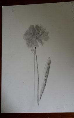fleur (dessin au crayon)