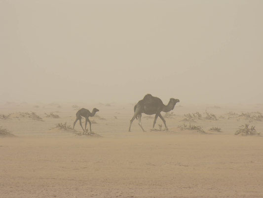 Südsahara