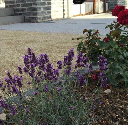 Lavendelbeet