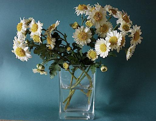 重陽もとうに過ぎ 菊花は冬に向かいてなお逞し