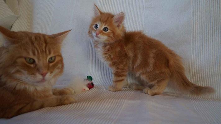 Biaro (Karlson) und Carlchen