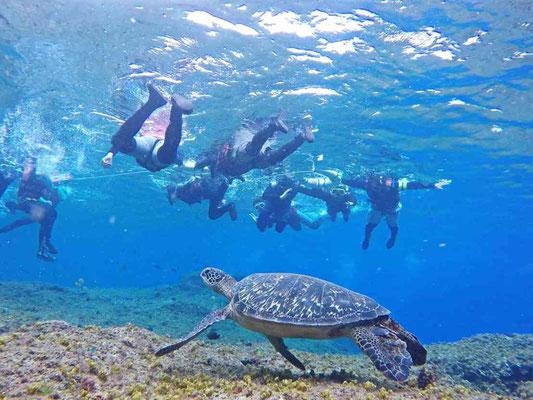 足元を泳ぐウミガメ