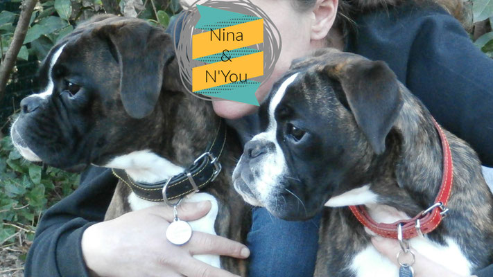 Nina des Fidèles Compagnos d'Uxen & N'You du Chemin d'Idolyne