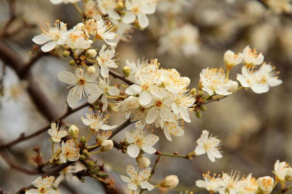Aufblühender Frühling