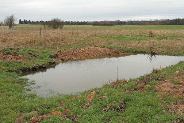 Neuester Flachwassertümpel von 2015
