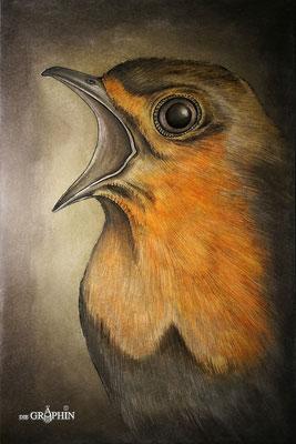 Rotkehlchen - engagierte Sänger der Vogelwelt © Jennie Bödeker