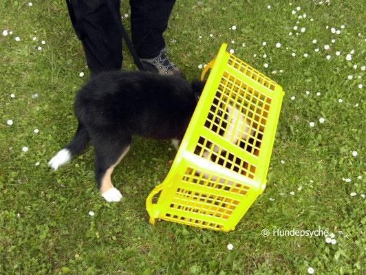 Wäschekorb erkunden
