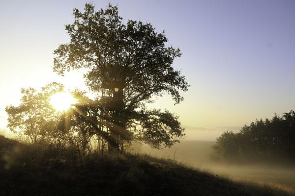 Sonnenaufgang bei Goddelsheim