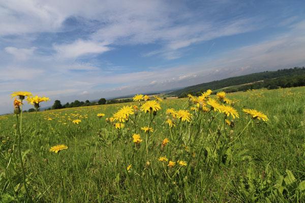 Hochebene bei Geismar - Blumenwiese