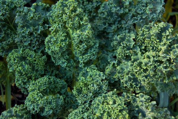 Les choux Kale