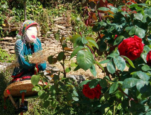 Madame Irma et les rosiers