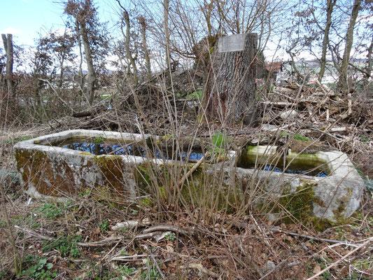 Die alten Brunnen werden langsam überwuchert und vom Wald verschlungen.