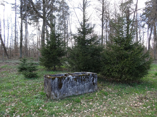 Fristet ein einsames Dasein im Wald.