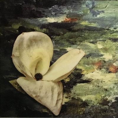 """Dogwood Blossom""  4x4  $35"