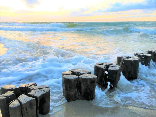Natur erleben Urlaub Ostsee Prerow
