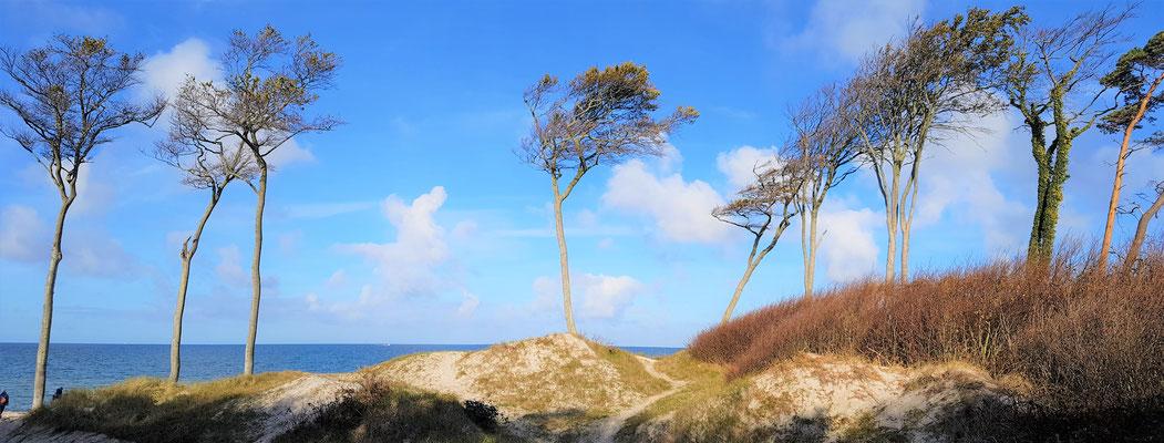 Blick auf die Ostsee Darss Mecklenbuirg Vorpommern