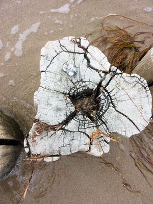 Holz Buhne Ostsee auf dem Darß