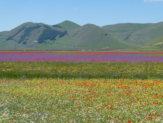 Sibillini Piano Grande in bloei