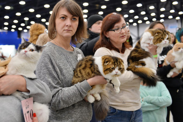 St.Petersburg Cat Show