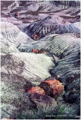 Petrified Forrest, AZ