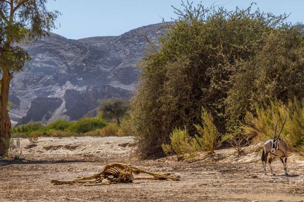 Matthias Gößmann: Tod im Huanib River (Giraffe und Orxy);  Damaraland, Namibia