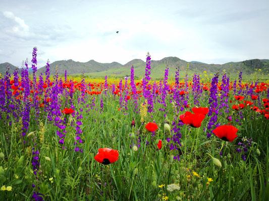 .... da hab ich doch mehr Freude an den Blumenwiesen