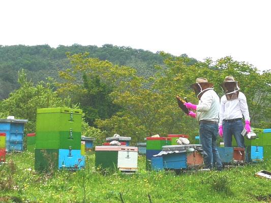 Erste Honigernte