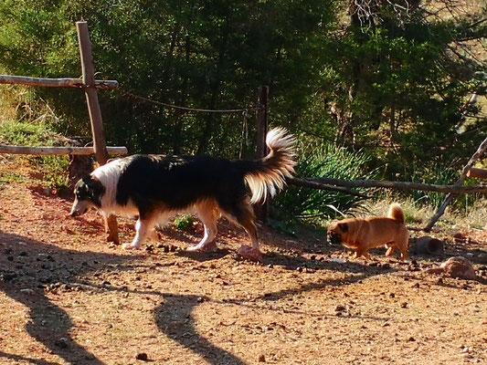 Joint und Bender, die Hofhunde